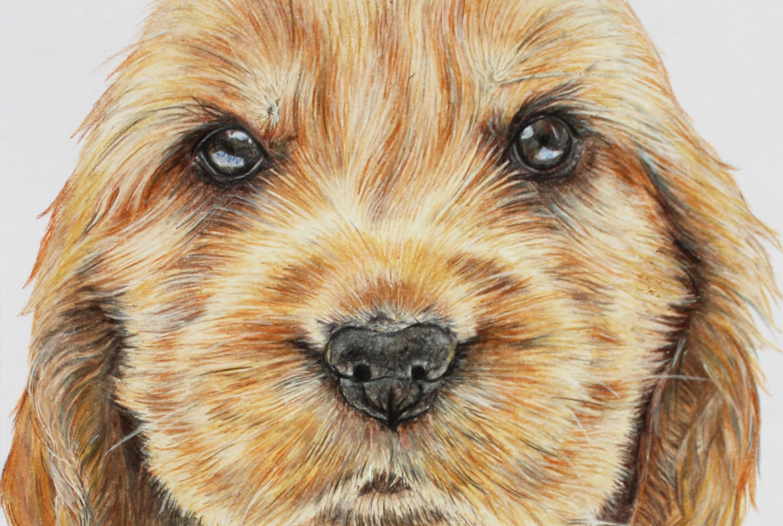 Art Kerry Pet Portraits