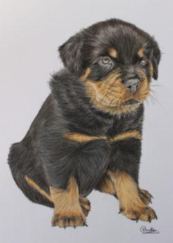 Dog portrait artist