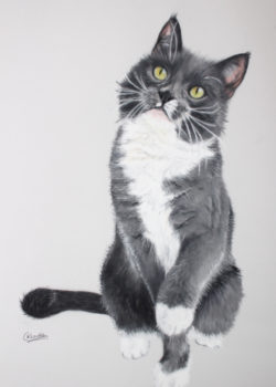 cat portrait artist