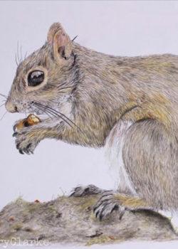 Wildlife Artist